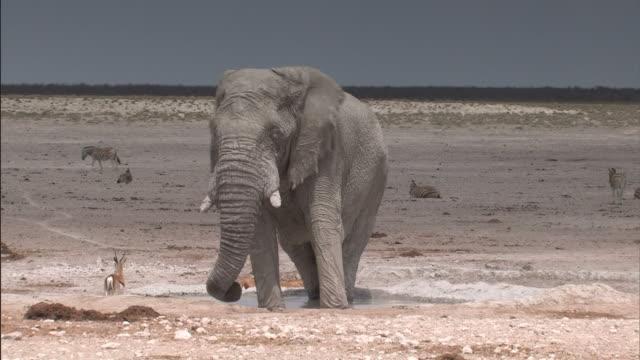 Elephant standing in a waterhole video