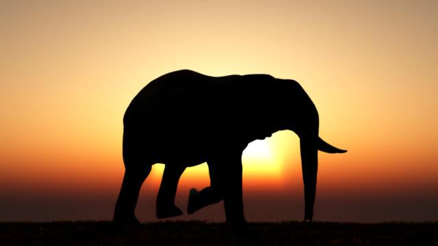 Elephant Sunset Loop video