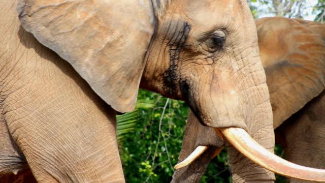 Elephant Walking video