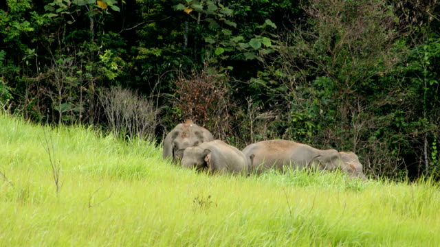 elefanten asien - großwild stock-videos und b-roll-filmmaterial