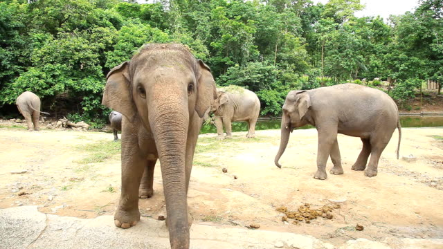 Elephants at begging for food from tourists. video
