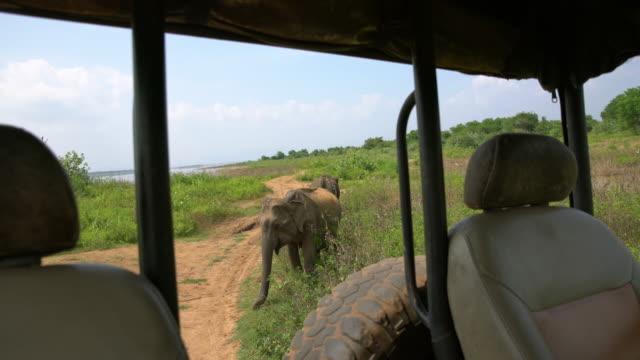 MS Elephants behind safari vehicle,Sri Lanka