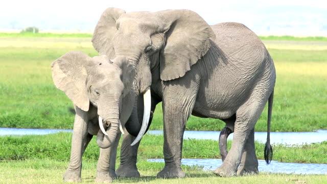 filler - büyük penisle seks için hazır - penis stok videoları ve detay görüntü çekimi