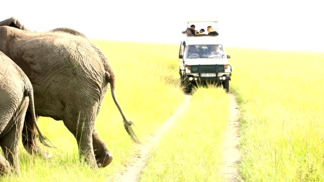 vídeos de stock e filmes b-roll de elefantes no safári selvagem com turistas em - quénia