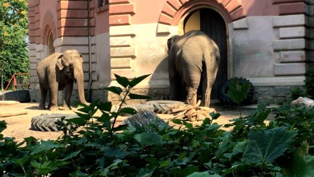vidéos et rushes de éléphants dans le zoo. un éléphant déverse sable sur lui-même. - zoo