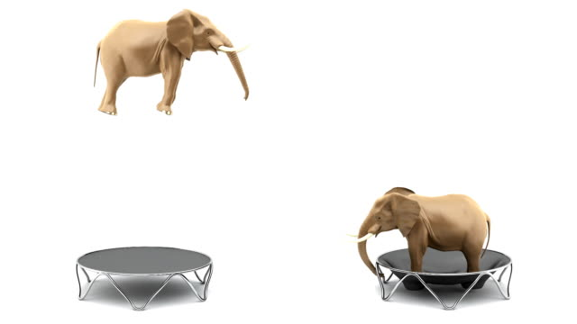 Elephants jumping on the trump