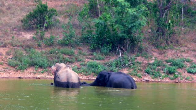 Elephants take a bath