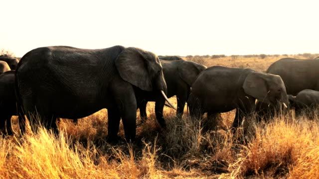 vidéos et rushes de éléphants - plan d'eau