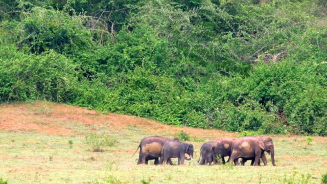 Elephants walking in national park