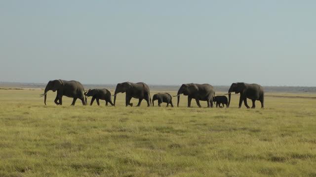 Elephants walking video