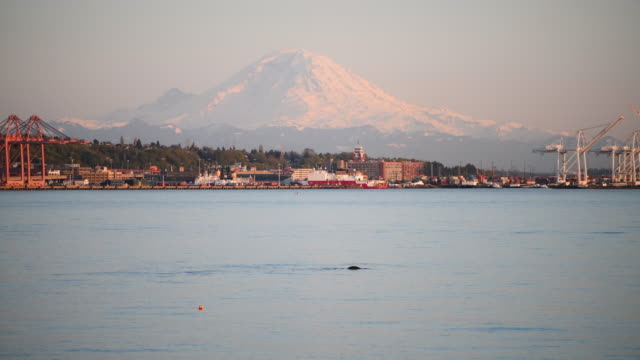 Elliott Bay Wildlife