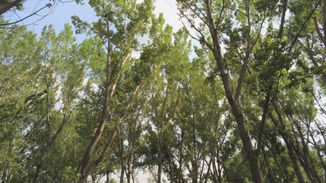 elm trees aerial footage video
