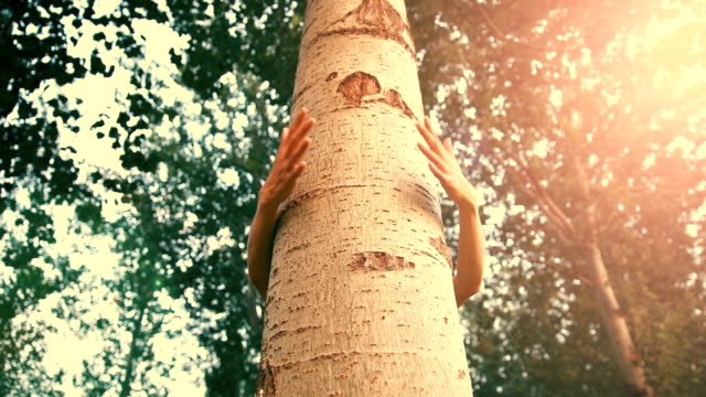 embrace a tree - serdeczny filmów i materiałów b-roll