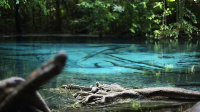 vídeos de stock, filmes e b-roll de sra morakot emerald pool (piscina azul)-(sra nam phut) pureza da natureza água em krabi, tailândia - esmeralda