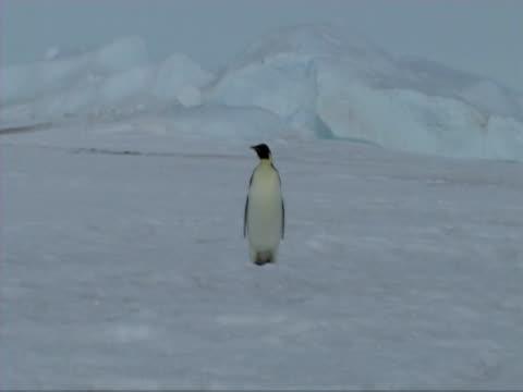 emperor penguin - donmuş su stok videoları ve detay görüntü çekimi