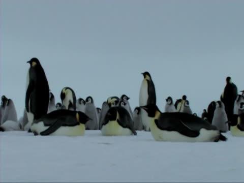 emperor penguins resting - donmuş su stok videoları ve detay görüntü çekimi