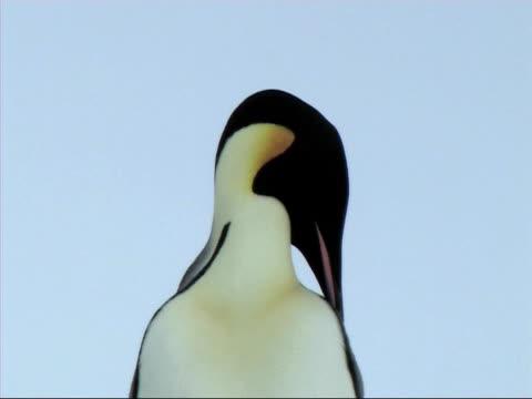 emperor penguins - donmuş su stok videoları ve detay görüntü çekimi