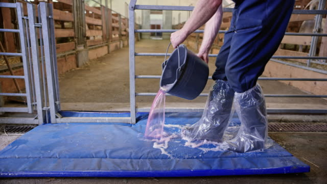 DS Employee spilling disinfectant foam onto the mat at the barn entrance video