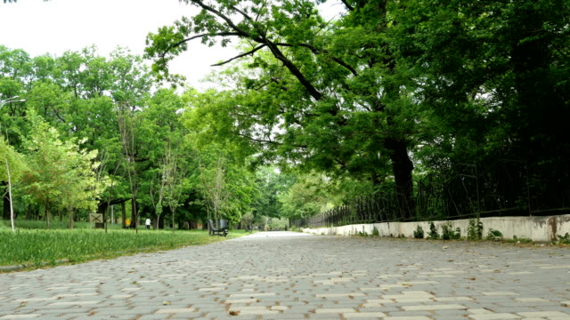 empty alley in a city park in the city of odessa in the ukraine among the trees. - природный парк стоковые видео и кадры b-roll
