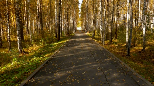 Empty alley in city park. Yellow leaves or leaf on birch. Golden autumn nice scene. video