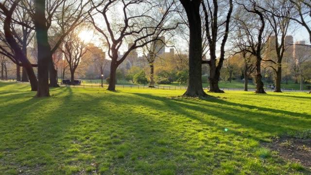 vídeos de stock e filmes b-roll de empty area in central park in manhattan - parque público