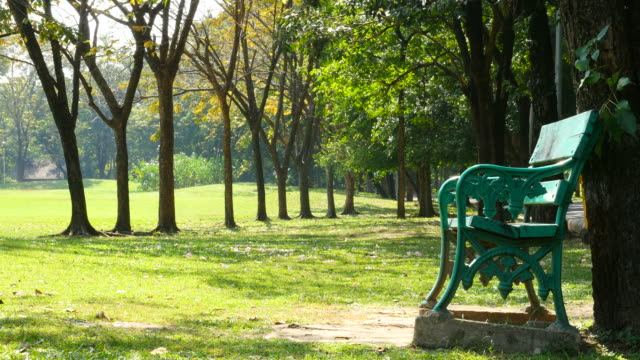 Empty Bench in Green Park at Morning video