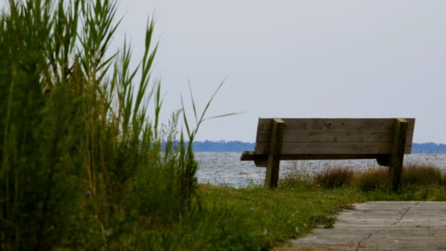 Empty Bench on Water video
