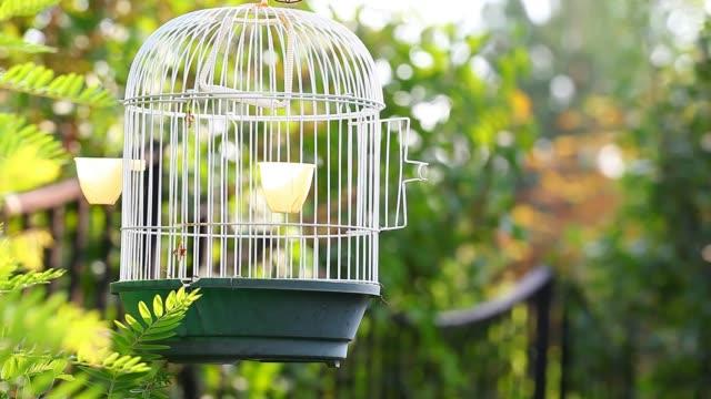 boş kuş kafese bahçe hd - kafes sınırlı alan stok videoları ve detay görüntü çekimi