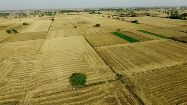 tomt fält efter vete skörd - haryana bildbanksvideor och videomaterial från bakom kulisserna