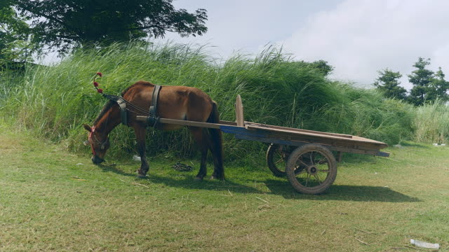 Empty horse cart eating grass in a field video