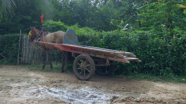 Empty horse cart waiting on the side of a rural path road Empty horse cart waiting on the side of a rural path road back to back stock videos & royalty-free footage