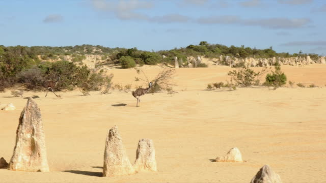 emus running at the pinnacles in western australia - western australia stock videos & royalty-free footage