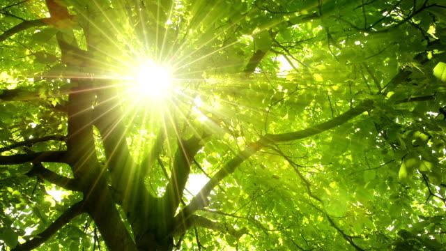 enchanting sun rays shining through lush foliage - obszar zadrzewiony filmów i materiałów b-roll