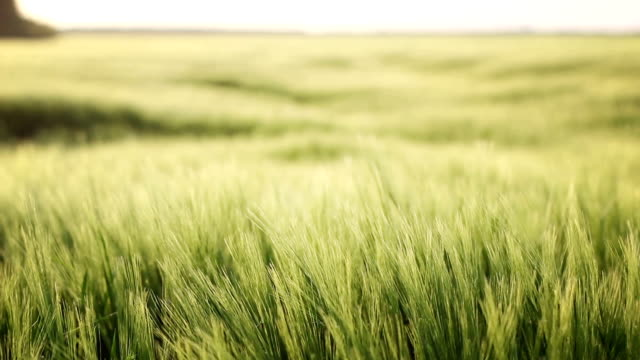 無限の畑 - 木目のビデオ点の映像素材/bロール
