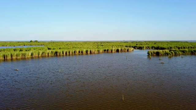 Endless expanses of water and reeds in the Danube Delta, aerial view video