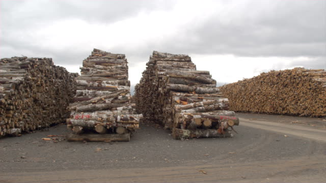 AERIAL: Endless parallel rows of perfectly stacked beech firewood woodpiles video