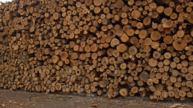 CLOSE UP Endless row of perfectly stacked log pile under the cloudy stormy skies video