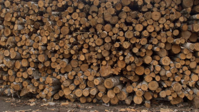 AERIAL: Endless row of stacked firewood logs at the edge of a forest in USA video