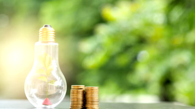 Energy saving. tree in light bulb and stacks of coins on nature background. Saving, Natural energy and financial concept. video 4K Slow motion