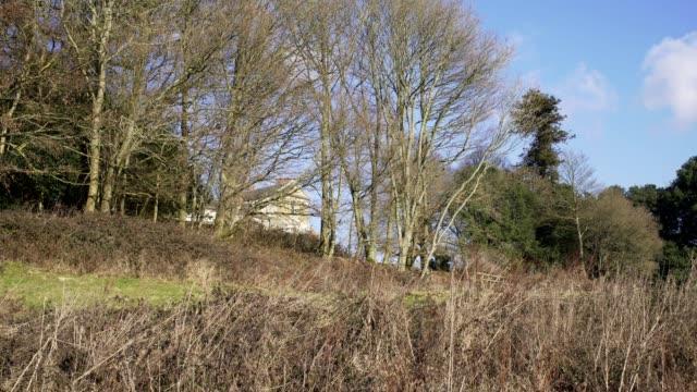 englische landschaft in der nähe von london. zeitigen frühjahr buchenholz. kopieren sie weltraum hintergrund. hohen bäumen und sträuchern - baumgruppe stock-videos und b-roll-filmmaterial