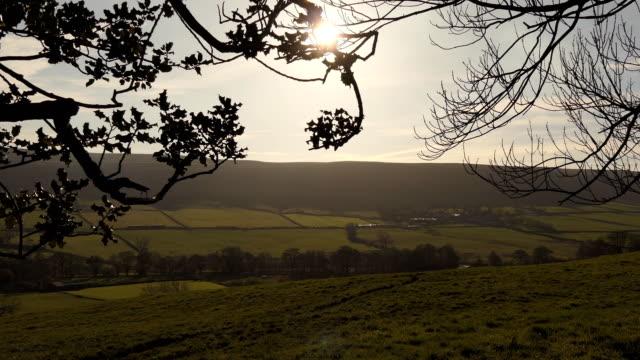 English countryside through holly shrub branches video