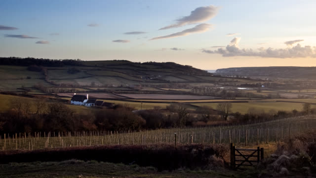 English vineyard hills and sea Timelapse MS video