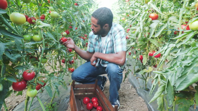 I enjoy every day working at my organic farm.