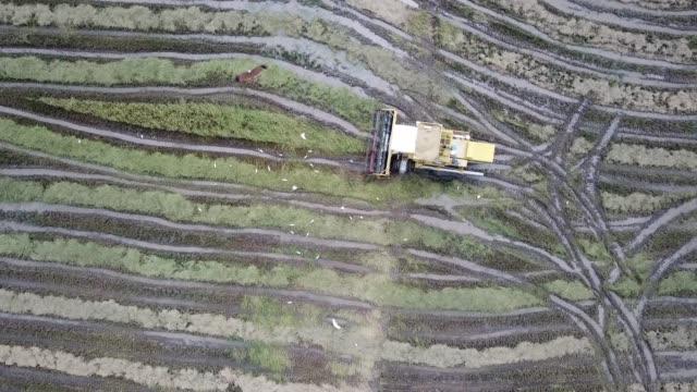 enorme adler fliegen über den harvester und kräne im reisfeld bei penang. - strohhut stock-videos und b-roll-filmmaterial