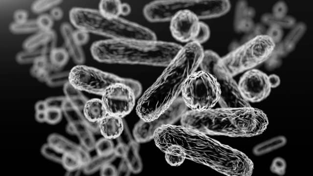 Enterobacteriaceae, gram-negative rod-shaped bacteria
