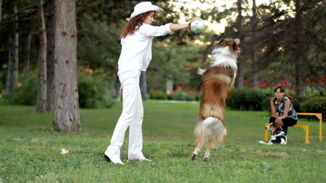 intrattenimento nel parco - cane addestrato video stock e b–roll