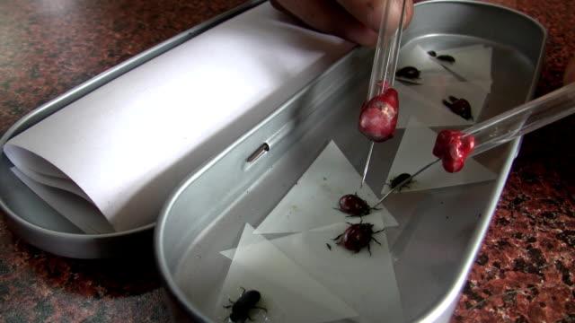 vidéos et rushes de entomologie - étudiant(e)