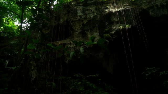 entrance to a large cave. around a lot of green trees - кейвинг стоковые видео и кадры b-roll