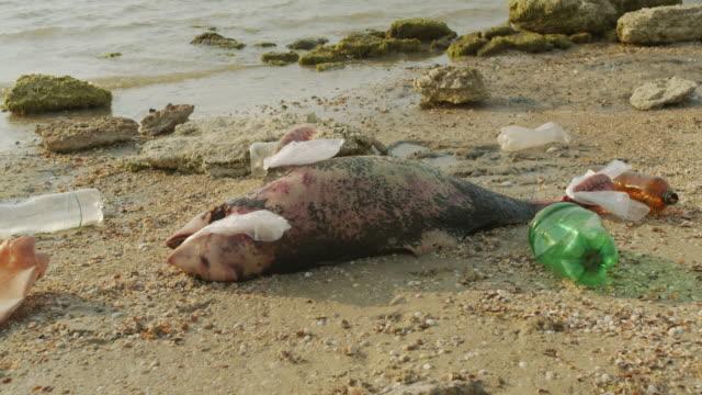 Milieu en dieren in het wild: dode jonge dolfijn aan de kust. Aard fauna, milieuvervuiling, ecologische catastrofe. Dode dier video