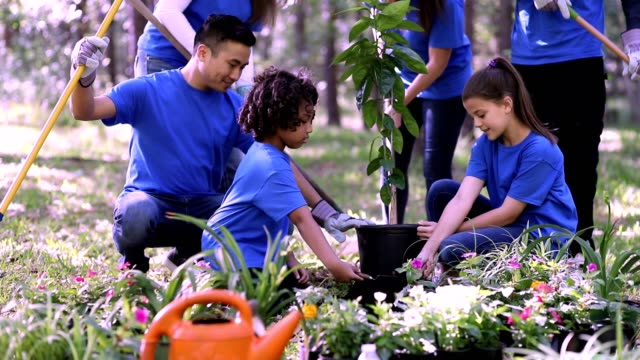 Environmental beautification. Volunteers plant flowers, tree, plants at park in spring. video
